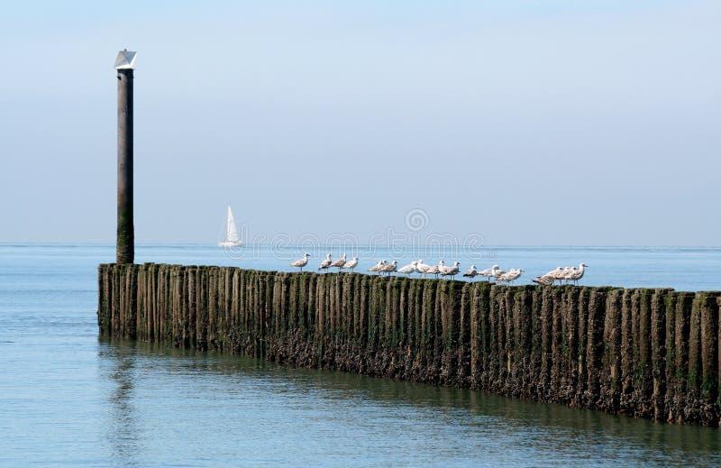 Spiaggia del Mare del Nord e durata della spiaggia di Westkapelle fotografie stock libere da diritti