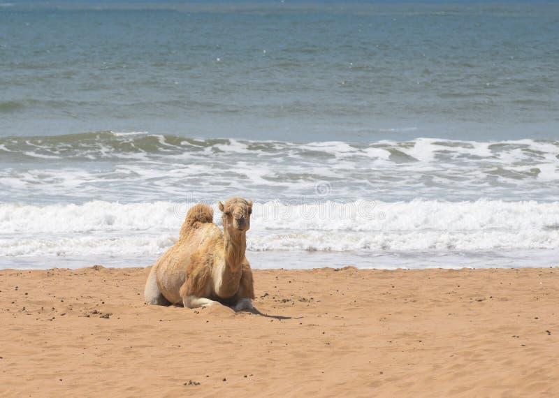 Spiaggia del Marocco Essaouira Windsuf immagini stock