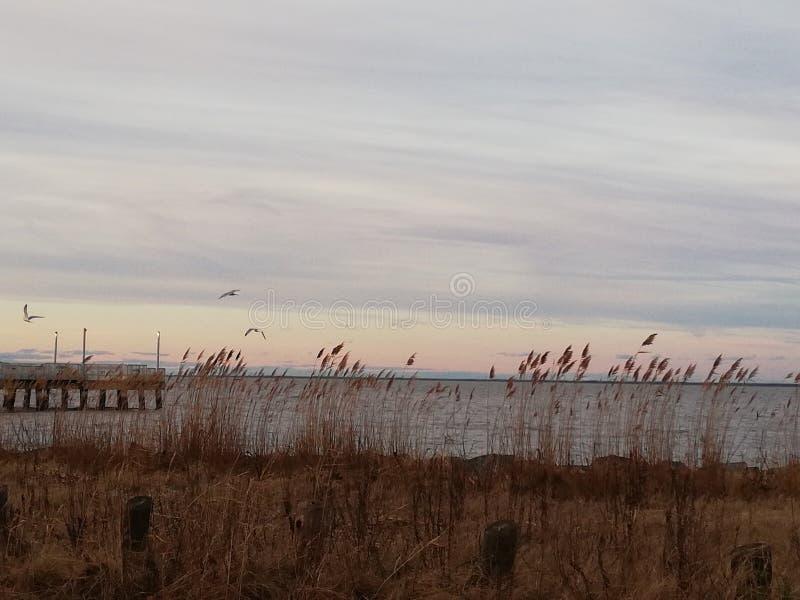Spiaggia del terreno boscoso nel Delaware fotografia stock libera da diritti
