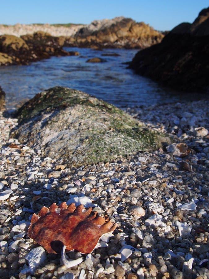 Spiaggia della baia di Monterey fotografie stock