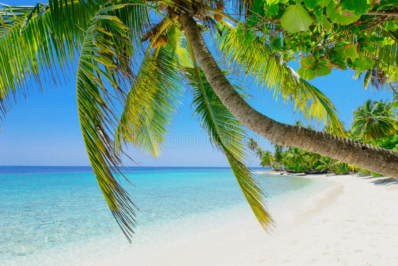 Spiaggia della palma immagine stock