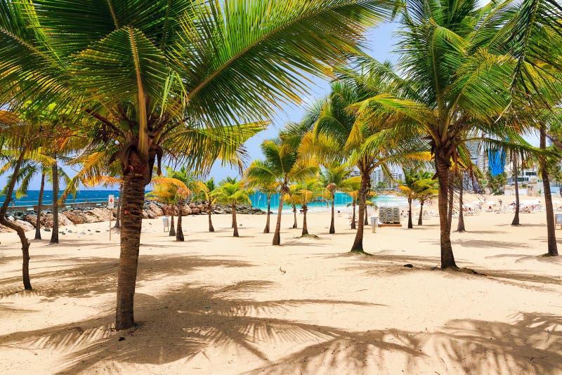 Spiaggia della palma fotografia stock libera da diritti
