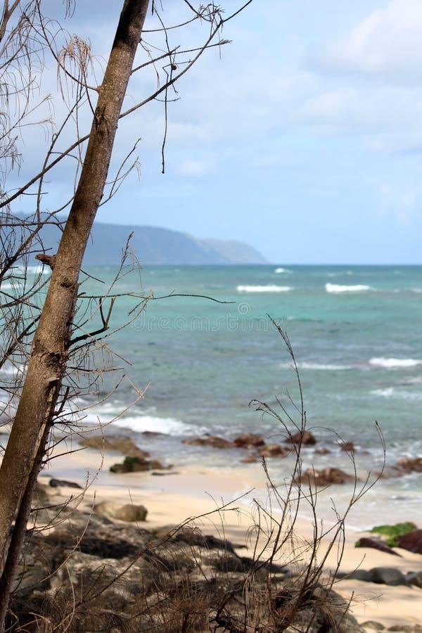 Spiaggia della tartaruga in riva del nord tropicale Oahu, Hawai fotografie stock libere da diritti