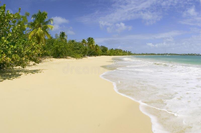 Spiaggia delle palme fotografie stock libere da diritti