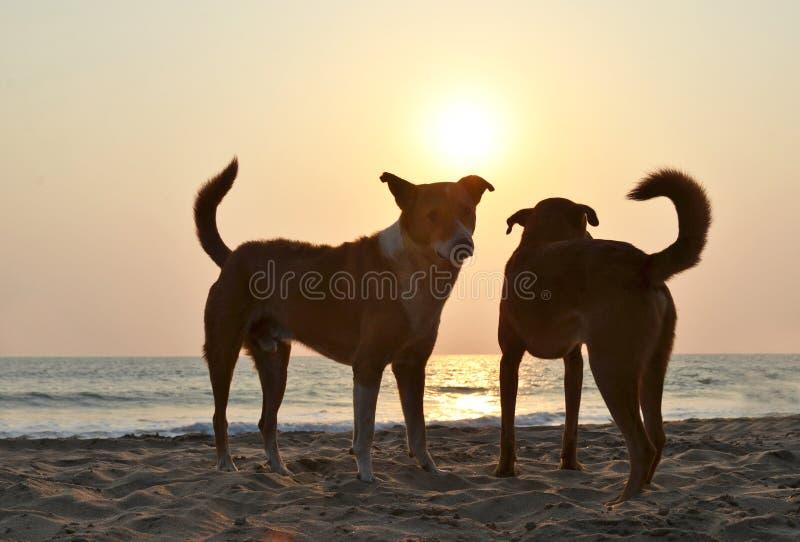 Spiaggia di Agonda di Goa del sud, India immagini stock