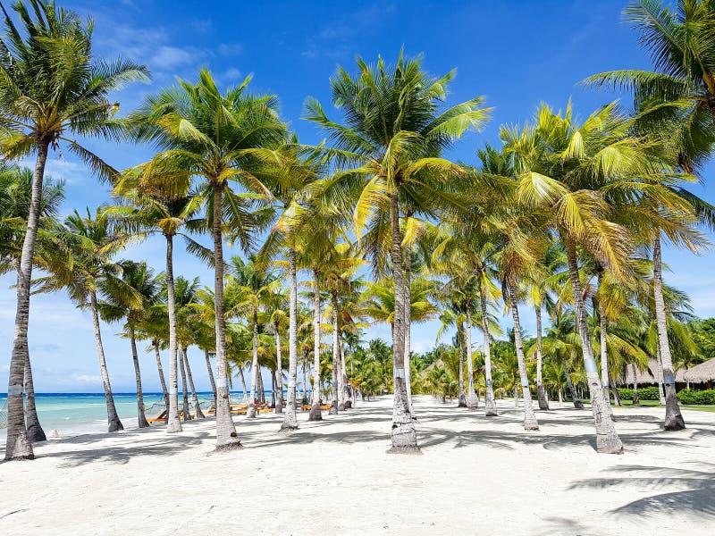 Spiaggia di Bohol, Filippine fotografie stock