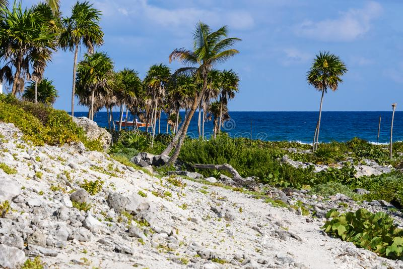 Spiaggia di corallo tropicale con gli alberi verdi del cocco Bei mare, oceano e cielo blu puliti nei precedenti Maya di Riviera,  fotografie stock libere da diritti