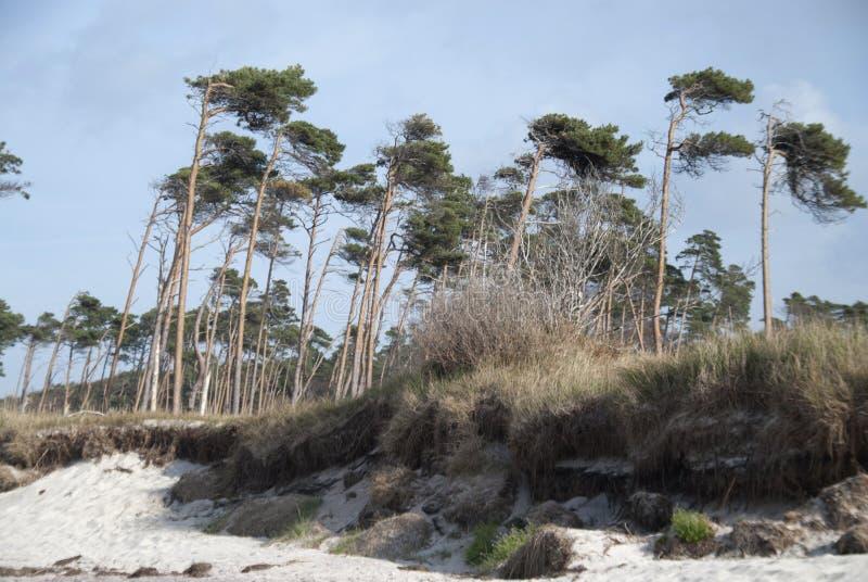 Spiaggia di Darss - Weststrand fotografia stock
