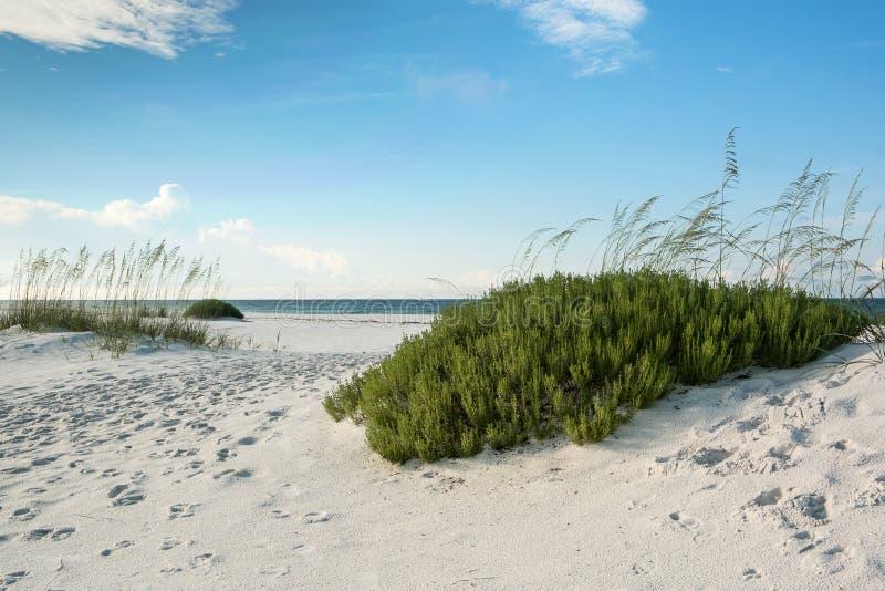 Spiaggia di Florida con i rosmarini della spiaggia fotografie stock libere da diritti