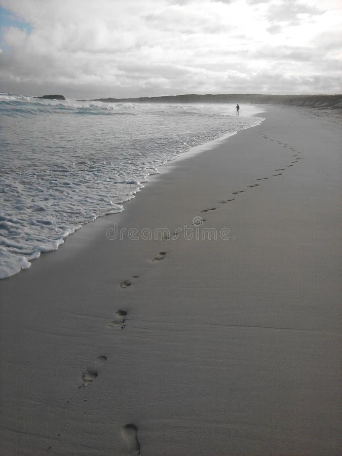 Spiaggia di Galapagos alla baia di Tortuga fotografia stock