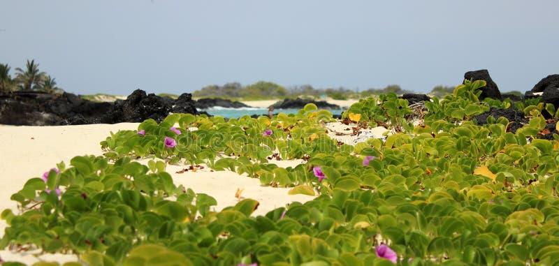 Spiaggia di Makalawena immagine stock