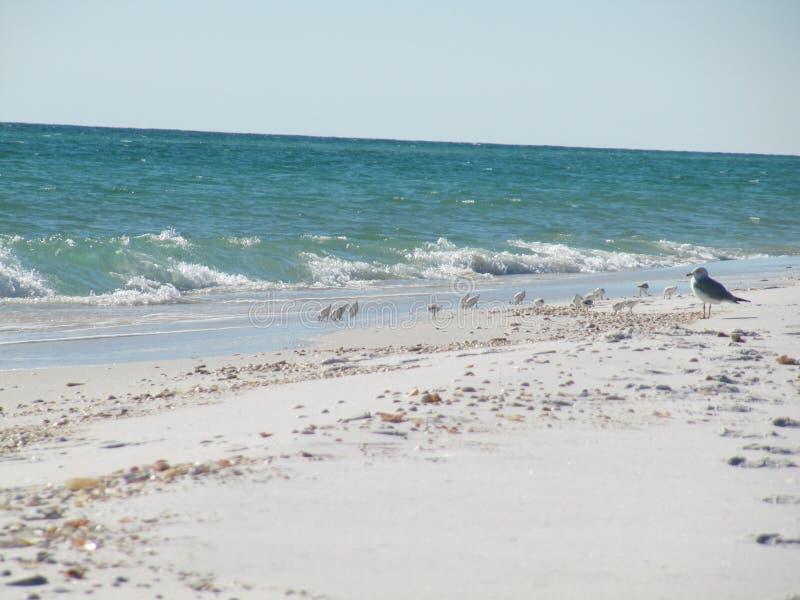 Spiaggia di Navarra fotografia stock libera da diritti