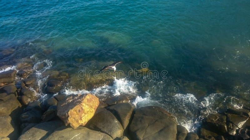 Spiaggia di Paracas in Perú 3 fotografia stock libera da diritti