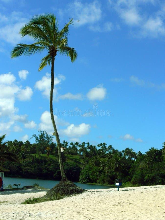 Spiaggia di paradiso fotografie stock
