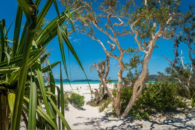 Spiaggia di paradiso di cielo di Whitehaven in Australia di estate fotografia stock