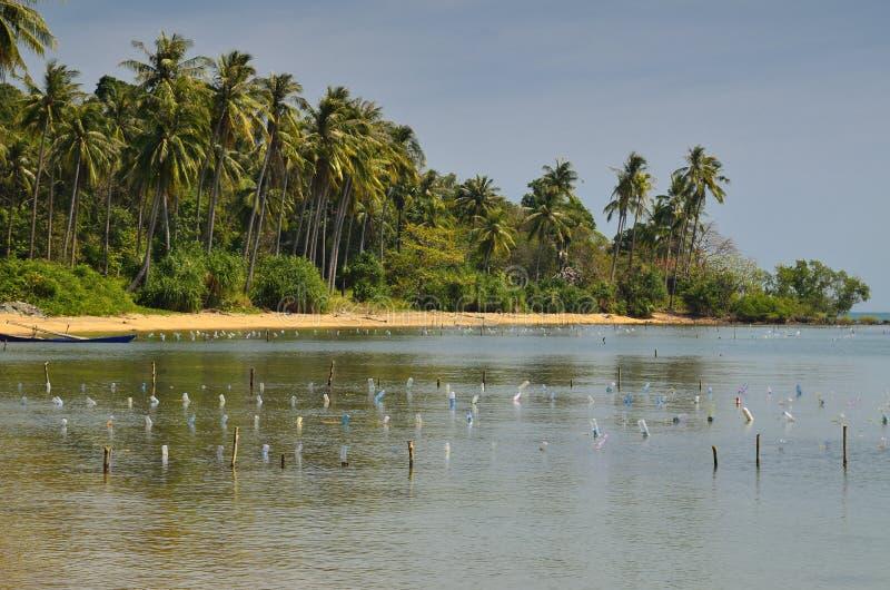 Spiaggia Di Paradiso Della Palma All Isola Del Coniglio Fotografia Stock Libera da Diritti