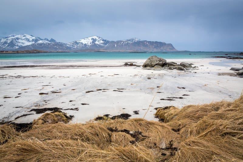 Spiaggia di Ramberg, isole di Lofoten, Norvegia immagini stock libere da diritti