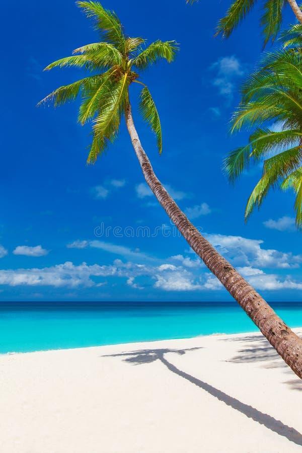 Spiaggia di sabbia tropicale con le palme, vacanze estive pH verticale fotografia stock