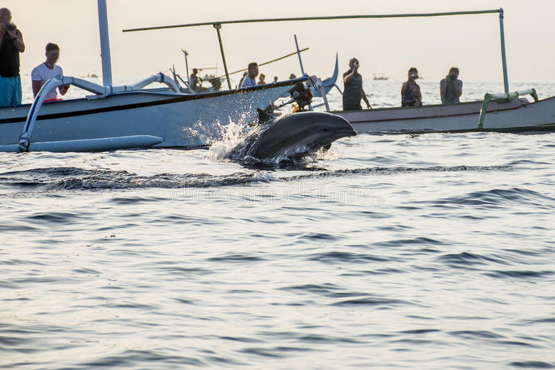 Spiaggia di sorveglianza di Lovina della barca del delfino libero di Bali immagini stock libere da diritti