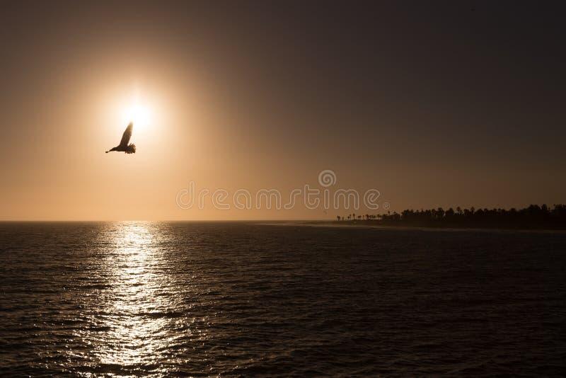 Spiaggia di tramonto del gabbiano fotografia stock