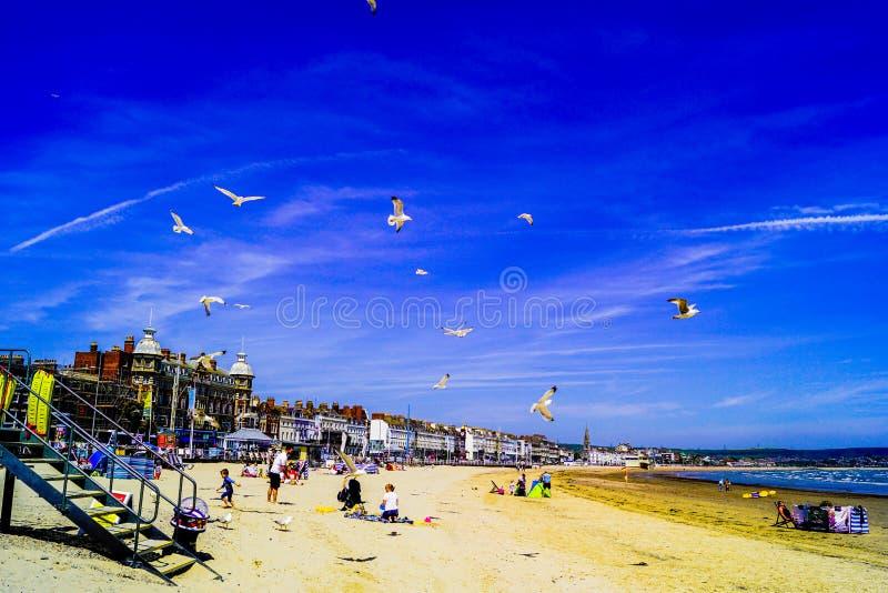 Spiaggia di Weymouth occupata con la gente e gli uccelli immagini stock libere da diritti