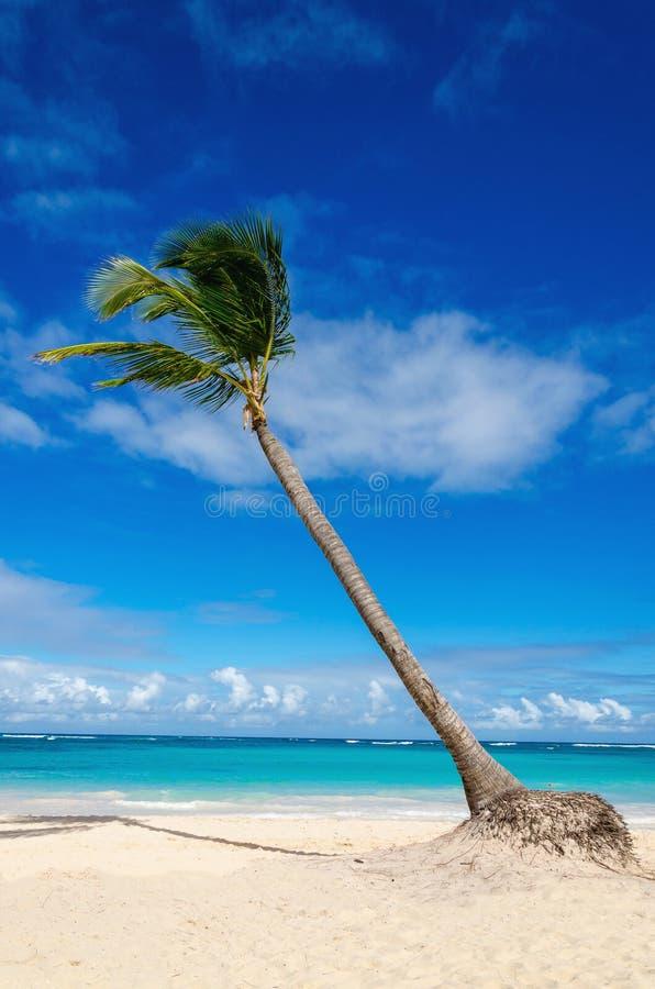 Spiaggia esotica stupefacente con la palma, Repubblica dominicana, isole dei Caraibi fotografie stock