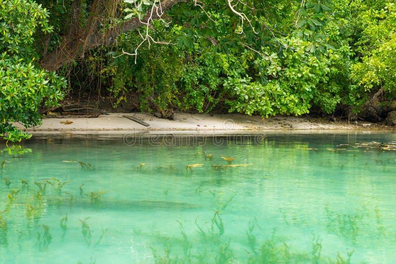 Spiaggia idilliaca lungo la linea costiera selvaggia con la foresta tropicale, Indonesia fotografia stock libera da diritti
