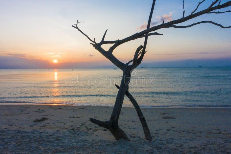 Spiaggia morta del legname galleggiante e di tramonto dell'albero fotografie stock