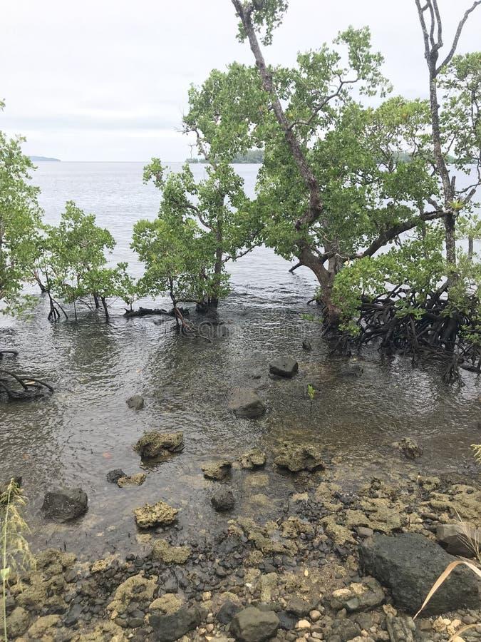 Spiaggia Nabire Papuasia Indonesia della mangrovia fotografia stock