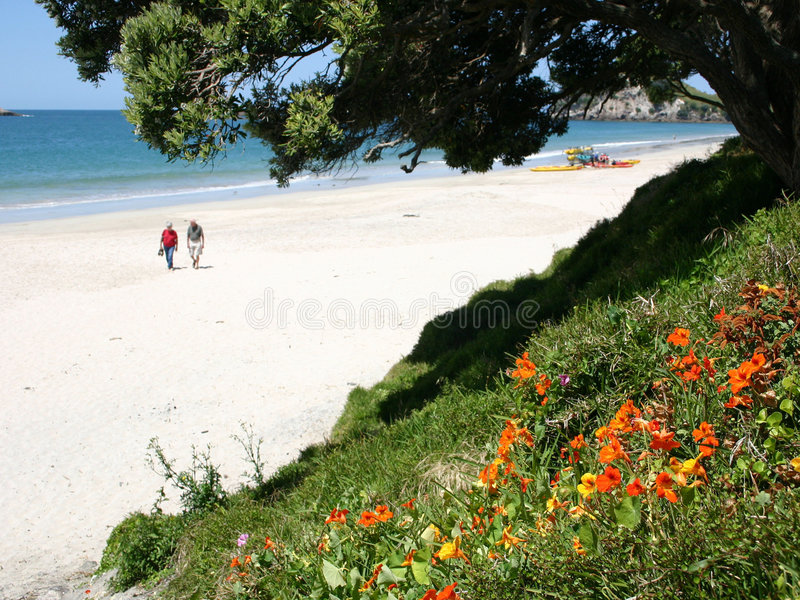 Spiaggia Nuova Zelanda di Hahei fotografie stock libere da diritti