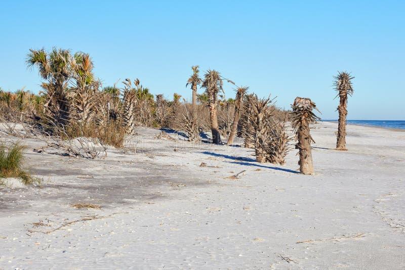 Spiaggia a poco Talbot Island State Park, Florida immagini stock