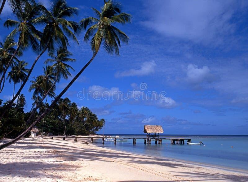 Spiaggia, punto del piccione, Tobago, caraibico. fotografia stock libera da diritti