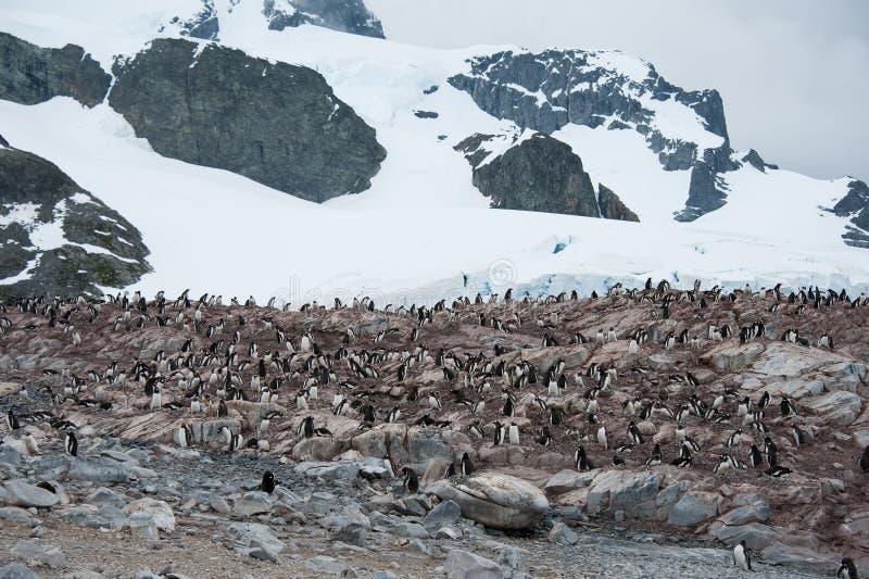Spiaggia rocciosa con i pinguini in Antartide immagine stock libera da diritti