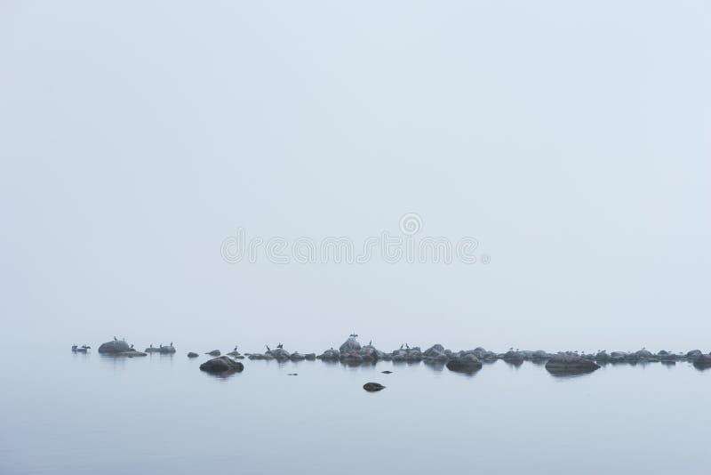 Spiaggia rocciosa, grande cormorano nero, gabbiani e nebbia di mattina di estate Mare, foschia, uccelli, costa, ambiente naturale fotografia stock libera da diritti