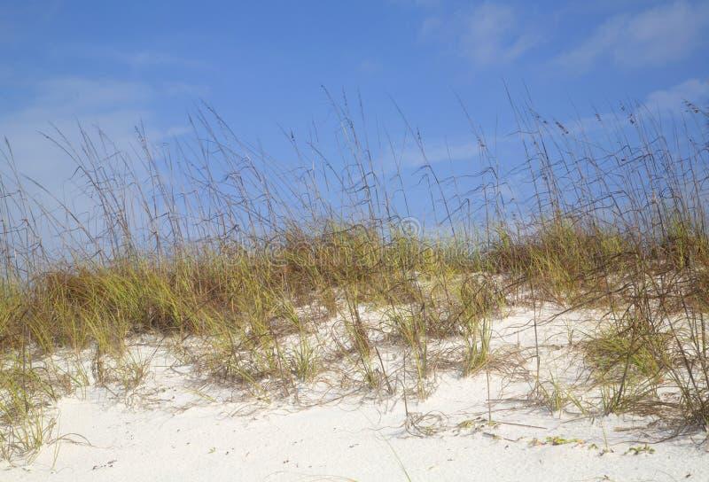 Spiaggia sabbiosa bianca con il fondo dell'erba fotografie stock