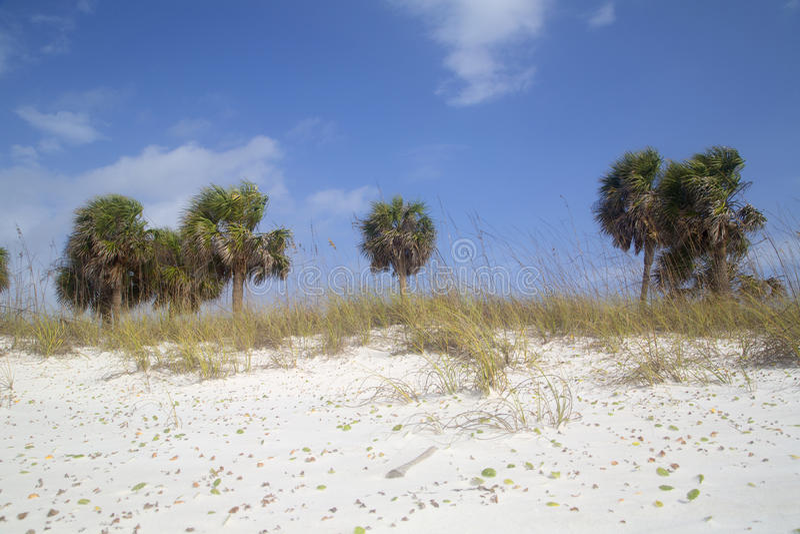 Spiaggia sabbiosa bianca con il fondo delle palme immagine stock libera da diritti