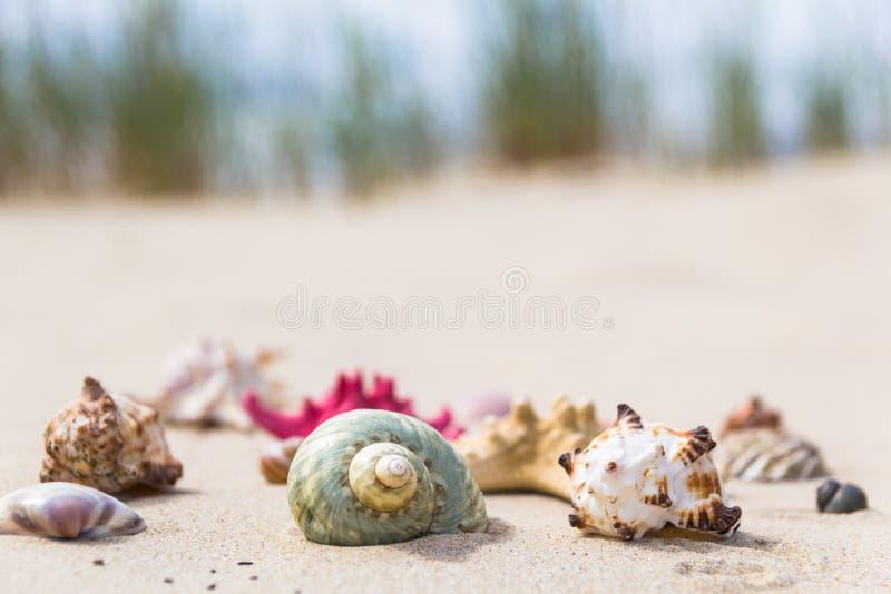 Spiaggia sabbiosa delle conchiglie variopinte immagini stock libere da diritti