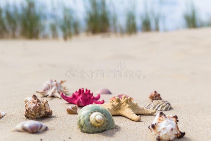 Spiaggia sabbiosa delle conchiglie variopinte fotografia stock libera da diritti