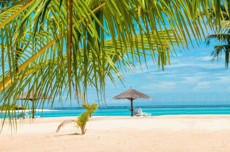 Spiaggia sabbiosa di Beautifuk con gli ombrelli delle palme e della palma immagini stock libere da diritti