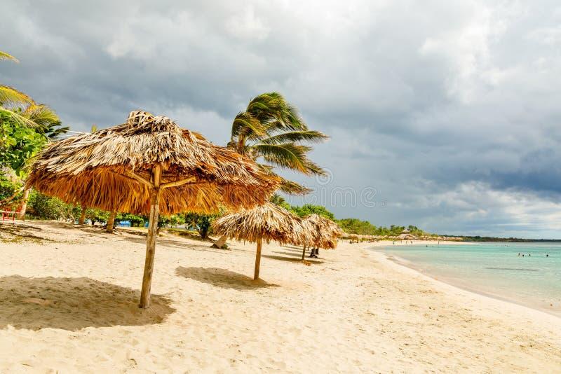 Spiaggia sabbiosa di Rancho Luna con le palme e gli ombrelli della paglia sulla riva, Cienfuegos, Cuba immagine stock