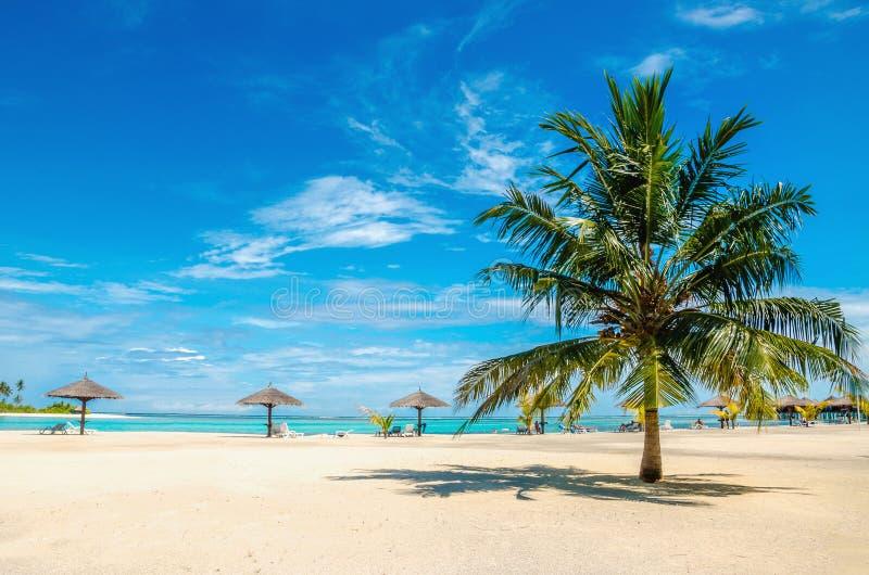 Spiaggia sabbiosa esotica con la palma immagine stock