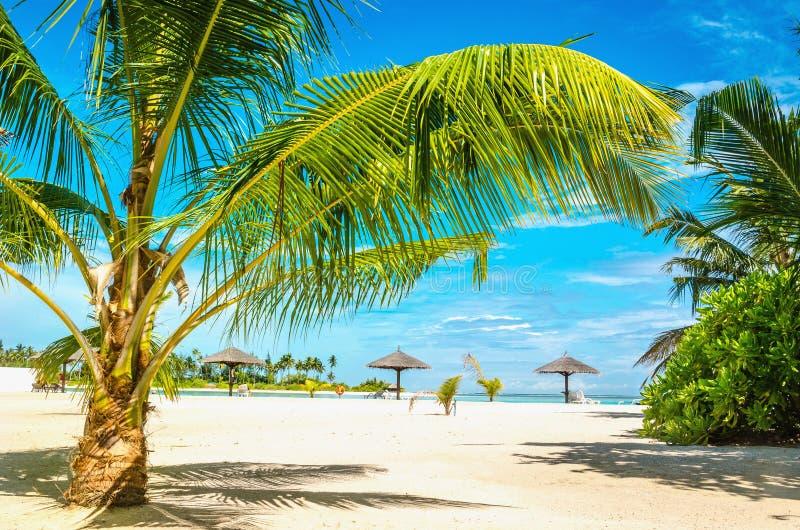 Spiaggia sabbiosa esotica con le palme fotografia stock
