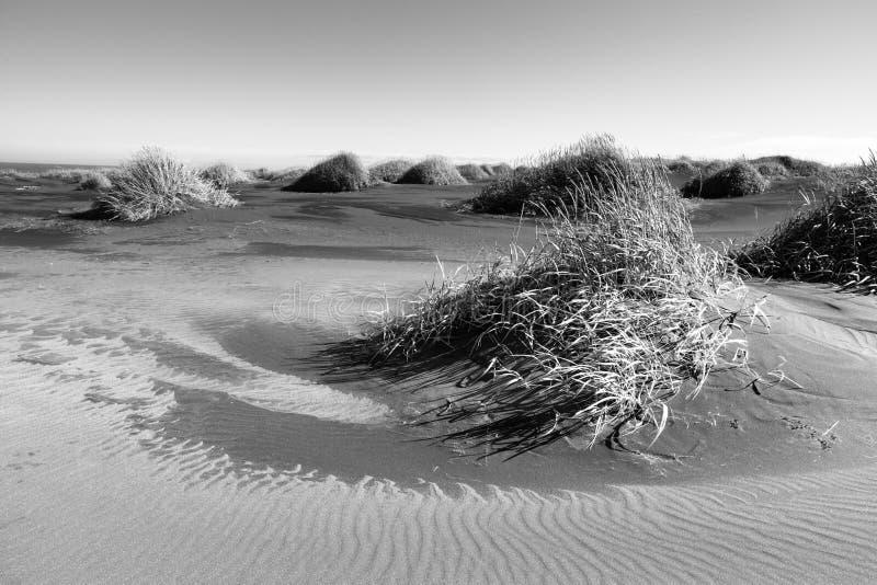 Spiaggia sabbiosa vicino a Stokksnes, Islanda orientale fotografia stock libera da diritti