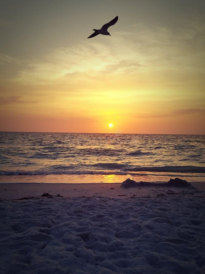Spiaggia salente Florida di San Pietroburgo di tramonto fotografie stock libere da diritti