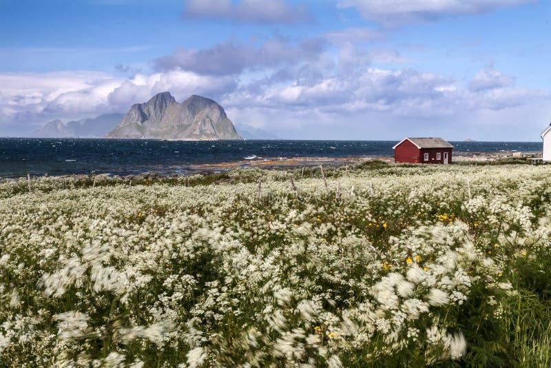 Download Spiaggia Scenica Sulle Isole Di Lofoten Fotografia Stock - Immagine di prato, nordico: 56886498