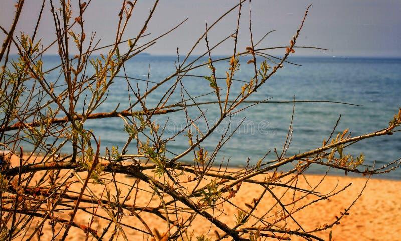 Spiaggia selvaggia del Baltico immagini stock