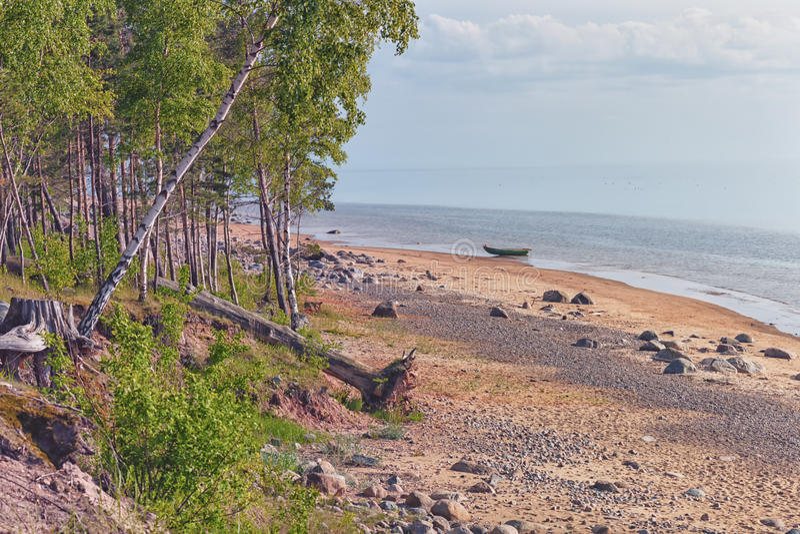Spiaggia selvaggia del Mar Baltico in primavera immagine stock