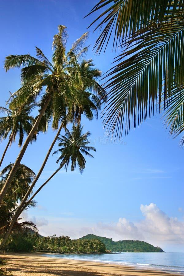 Spiaggia sola con la sabbia dorata, palme verdi, mare blu, cielo soleggiato, fondo bianco delle nuvole immagine stock