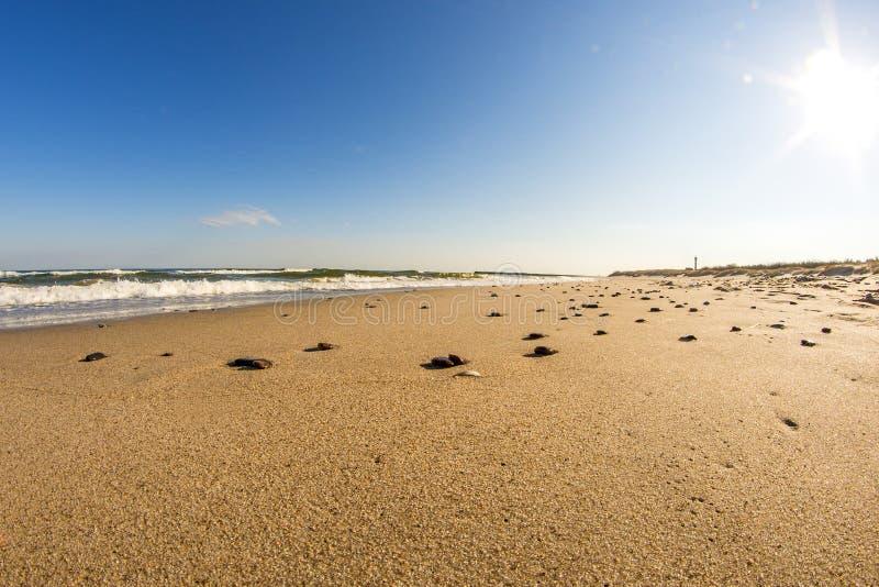 Spiaggia solitaria del Mar Baltico fotografie stock libere da diritti