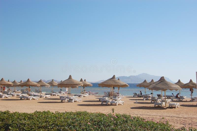 Spiaggia sul litorale del Mar Rosso, Sharm El Sheikh, Egitto fotografie stock libere da diritti